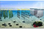 Proposals for research projects to support aquaculture