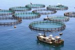 aquaculture projects